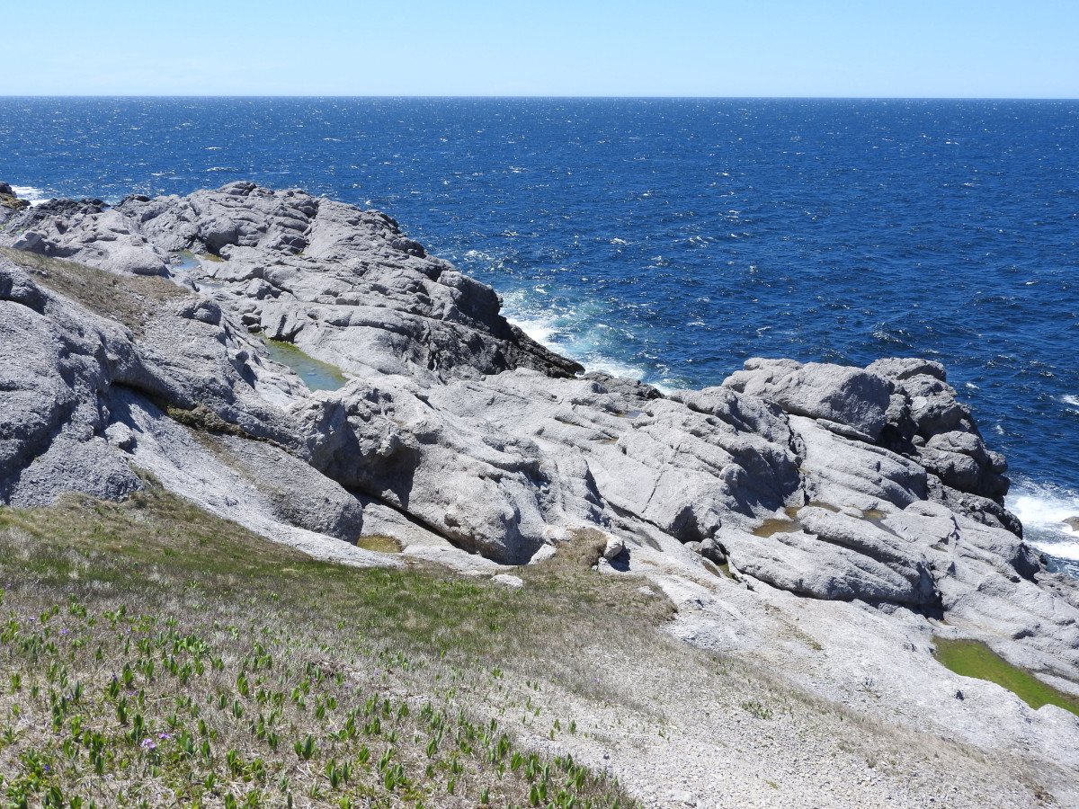 Point of The Head Trail - Cow Head, , Scenic Attraction